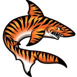 ROFC Tiger Sharks team badge